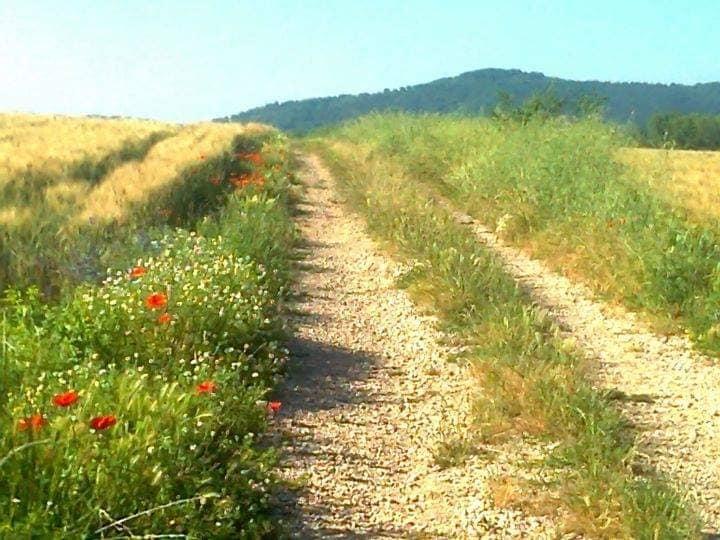 lungo i sentieri dei naharki